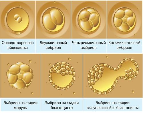 Особенности культивирования эмбрионов